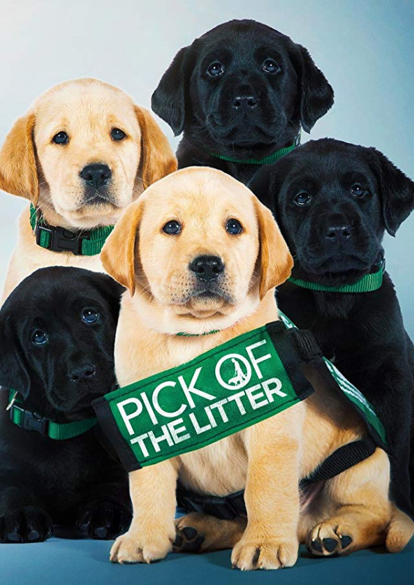 'Pick Of The Litter' movie poster